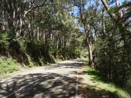 The road from Healesville to Donna Buang.